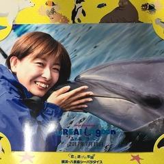 Yoko Wakayama