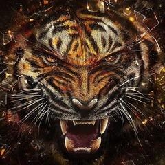 Tanioka Tiger